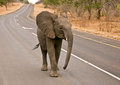 African Elephant stroll on highway Stock Photo