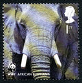 African Elephant UK Postage Stamp Royalty Free Stock Photo