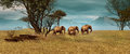 African elephants d computer graphics of a elephant herd in the steppe Royalty Free Stock Photos