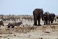 African elephants at Gemsbok, sprinbok and zebras at waterhole Royalty Free Stock Photo