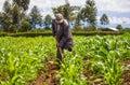 African Farmer Weeding Royalty Free Stock Photo