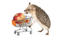 African hedgehog with apple Royalty Free Stock Photo