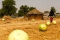 Fresh Calabash African Hut Royalty Free Stock Photo