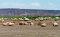 African Huts Royalty Free Stock Photo