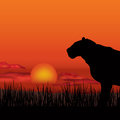 African landscape with animal silhouette. Savanna sunset backgro Royalty Free Stock Photo