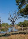 African landscape and river in uar kruger s park south Stock Image