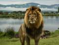 African lion at lake in Serengeti Royalty Free Stock Photo