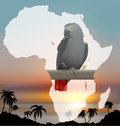 African map with background and grey parrot jaco Stock Photos