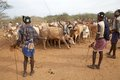 African men and cattle