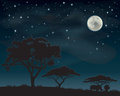 African night sky two rhinos standing under acacia trees silhouetted against a starry Royalty Free Stock Image