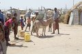 African people and the donkey at the village along the shore of the turkana lake ethiopia Royalty Free Stock Image