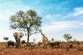 African Safari Animals Meeting Together Around Tree Royalty Free Stock Photo