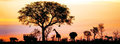 African Safari Silhouette Banner Royalty Free Stock Photo