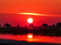 African safari sunset over the Chobe river Royalty Free Stock Photo