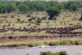 African savanna river and with wildebeests and elephants Stock Photos