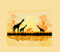 African savannah abstract background illustration Stock Images