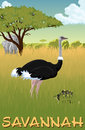 African savannah with ostrich, turtle and elephants - vector
