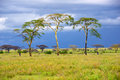 African savannah Royalty Free Stock Photo