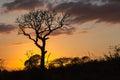 African Sunrise Tree Bush Hill...