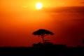 African sunset beautiful in masai mara national park kenya Royalty Free Stock Photo