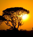 African sunset in savannah Stock Image