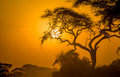 African sunset in savannah kenya Royalty Free Stock Photography