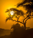 African sunset in savannah panorama of kenya Royalty Free Stock Photography