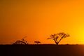 African Sunset South Africa