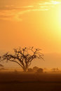 African tree in morning sunlight an Royalty Free Stock Images