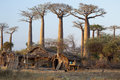 African village with baobabs Royalty Free Stock Photo