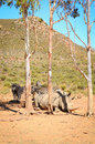African white rhinos relax during midday heat Stock Photos
