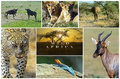 African wild animals Royalty Free Stock Photo