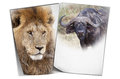 African wildife background wildlife posters on the isolated Royalty Free Stock Image