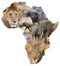 African wildlife background map with the big five lion panthera leo buffalo syncerus caffer black rhinoceros diceros bicornis Stock Photography