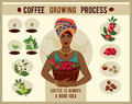 African woman is a coffee farmer with a basket of coffee berries on the coffee farm. Royalty Free Stock Photo