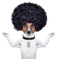 Afro dog look with very big curly black hair Royalty Free Stock Photography