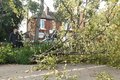 Aftermath of st jude storm fallen tree on the residential road in london a that passed over uk on monday morning th august Royalty Free Stock Photo