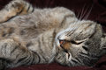 Afternoon cat sleep Royalty Free Stock Photo
