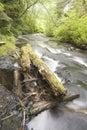 Afternoon at Gnat Creek Royalty Free Stock Photo