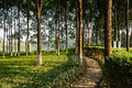 Afternoon sun casts warm light on waterside lawn and footpath the of the chengdu china Royalty Free Stock Image