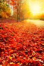 Afternoon sun on fall leaves Royalty Free Stock Photos