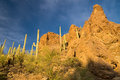 Afternoon sun on Saguaro National Park Royalty Free Stock Photo