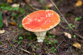 Agaric Stock Photography