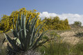 Agave plant in foreground and a busch with yellow flower and blu Royalty Free Stock Photo