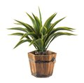 Agave in wood bucket -Artificial plant Royalty Free Stock Photo