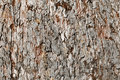 Aged Bark Background Stock Images