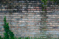 Aged Brick with Ivy Left Royalty Free Stock Photo