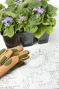 Ageratum plants with landscape drawings home drawn gardening plans pack of and gardening gloves Royalty Free Stock Image