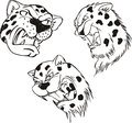 Aggressive leopard heads set of black and white vector tattoo designs Royalty Free Stock Image