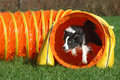Agility tunnel Royalty Free Stock Photo